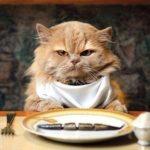 История про кота и тефтели для мистера Тефта