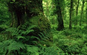 lough-key-forest-park-ireland-1600x1200-id