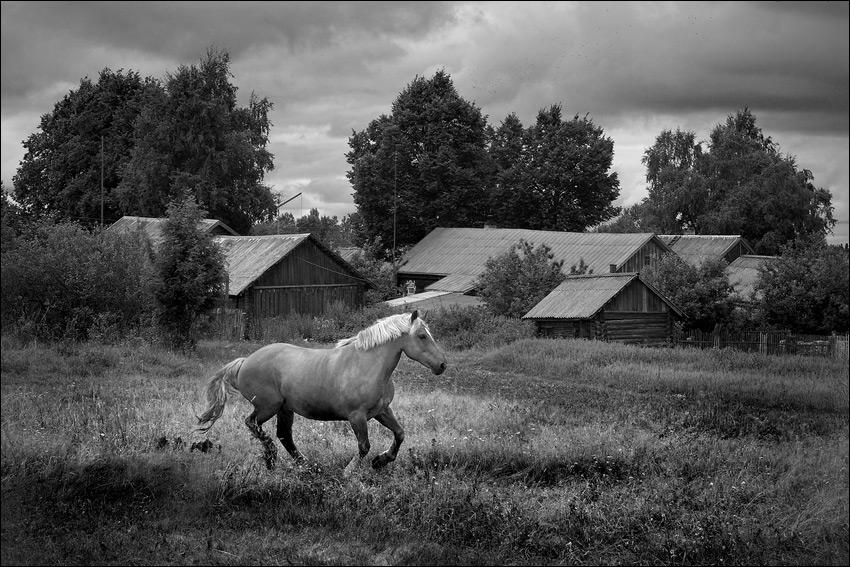 Конь-в-деревенском-поле