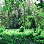 Записки на полях — Индояз
